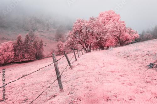 Foto op Plexiglas Lichtroze Champ, prairie, pâturage et forêt embrumés en infrarouge, rose.
