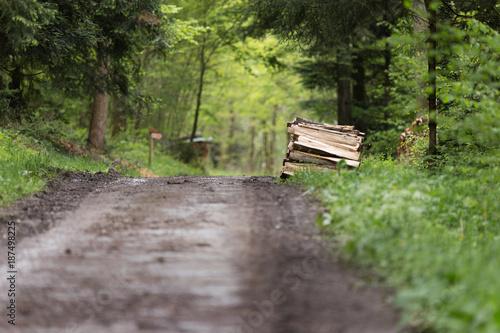 Foto Murales Chemn forestier avec une pile de bois