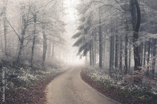 Foto op Plexiglas Weg in bos Brouillard givrant dans une forêt