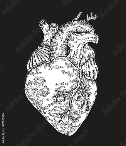 Hand drawn human heart on black background. Vector illustration engraved