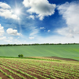 picturesque rural landscape with a green spring field lit by the bright sun