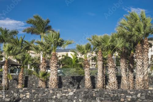 Poster Oceanië Palm trees Alcala Tenerife