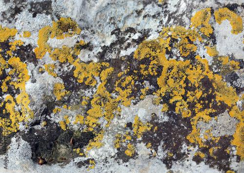 Keuken foto achterwand Stenen Pxere, a kind of stone moss