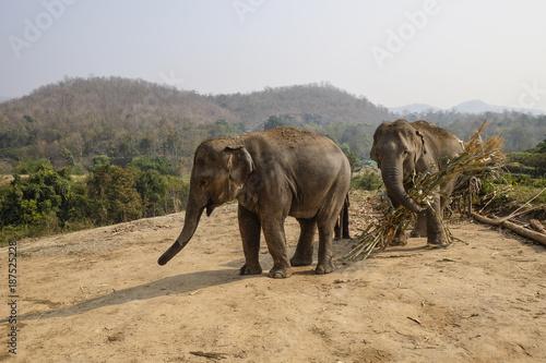 elephants thailand Poster