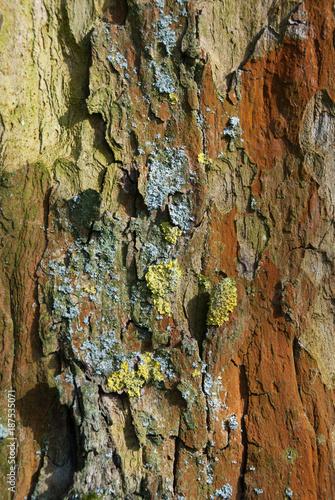 Baum Rinde - 187535071