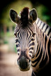 Zebra close up portrait