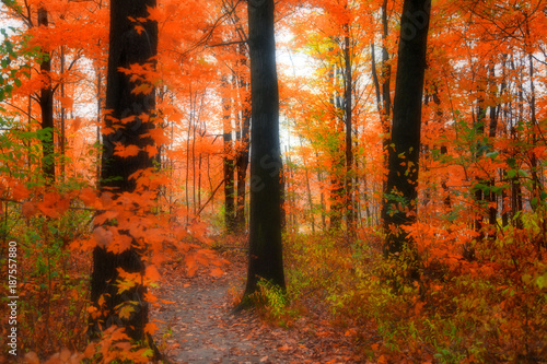 Staande foto Herfst Bright color trees in Michigan during autumn time