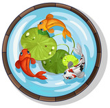 Three kois swimming in small pool - 187564284