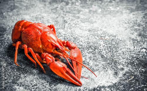 Welded river crayfish. - 187571657