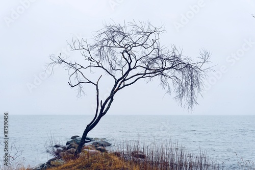 Fotobehang Wit Lonely tree on a beach