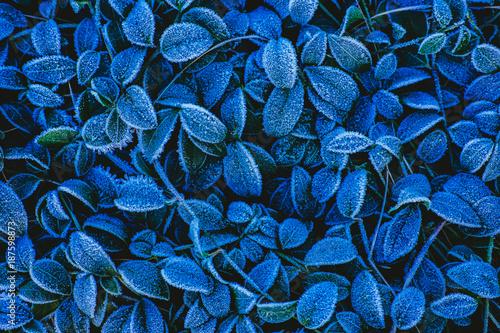 Sticker Frosty leaves background
