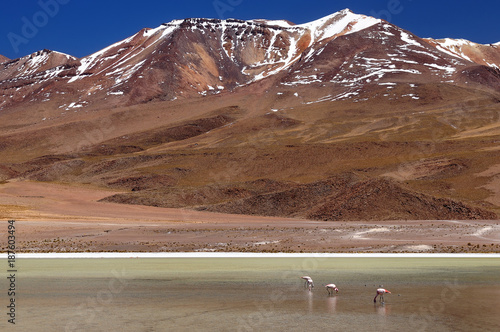 Foto op Plexiglas Cappuccino Bolivia - the most beautifull Andes in South America. The surreal landscape is nearly treeless, punctuated by gentle hills and volcanoes near Chilean border