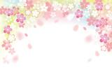 桜 フレームふわり カラー - 187606213