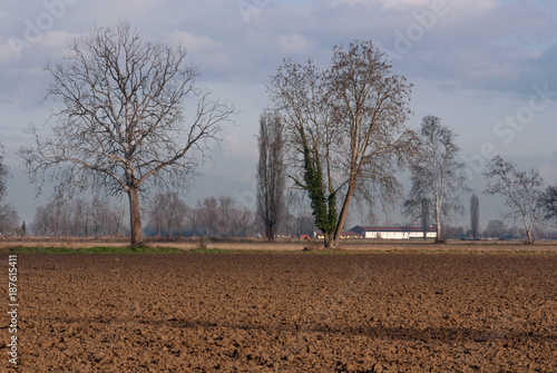 Fotobehang Diepbruine paesaggio di campagna in inverno