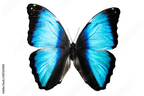 Aluminium Vlinder бабочка синего цвета Mariposa Morpho изолировано на белом