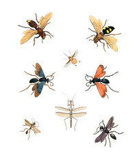 Illustration of insects.