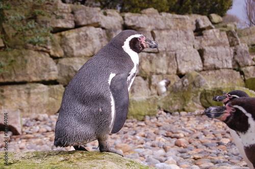 Aluminium Pinguin The Penguin