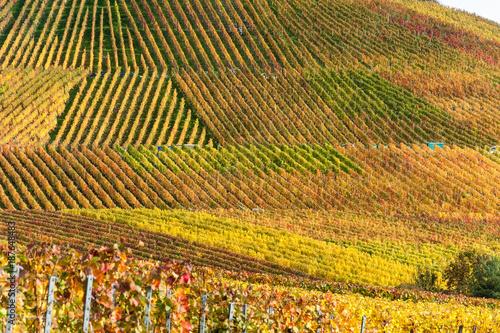 Poster Wijngaard Weinberge im Herbst bei Brackenheim