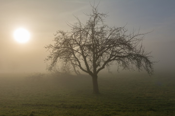 Idylle im Nebel - einsamer baum im Feld