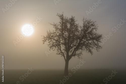 Staande foto Grijs Baum im Nebel mit Sonne