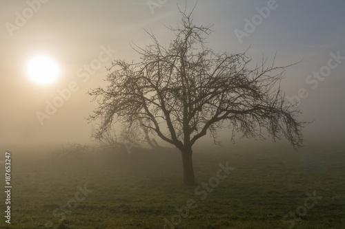Foto Murales Idylle im Nebel - einsamer baum im Feld