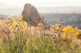 Landscape with blue and yellow flowers in summer, blurry background. - 187653455