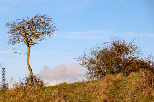 Fotobehang Blauwe hemel Single Tree on Hill with Bush