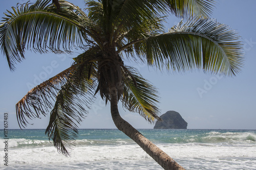 Fotobehang Tropical strand Palm tree Diamond beach Martinique