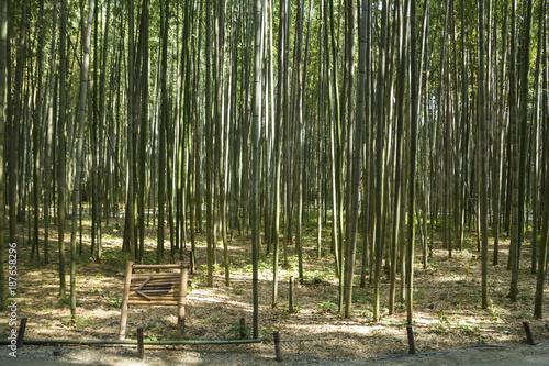 Aluminium Bamboe Bamboo forest at Kyoto, Japan