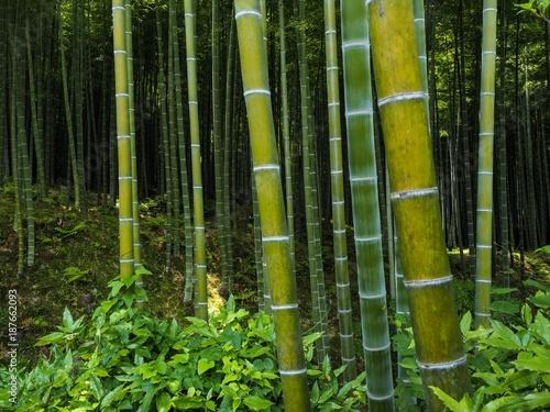 Aluminium Bamboe Bambus Wald Hintergrund