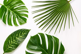 Creative Tropical Fresh Palm Leaves Set. Green Summer Design. Art Bright Summer Layout. Nature Beach leaves background. Minimal. Detail