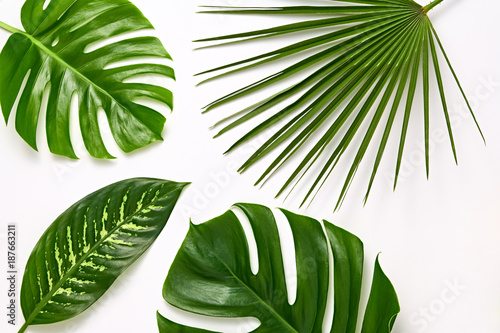 Foto Murales Creative Tropical Fresh Palm Leaves Set. Green Summer Design. Art Bright Summer Layout. Nature Beach leaves background. Minimal. Detail