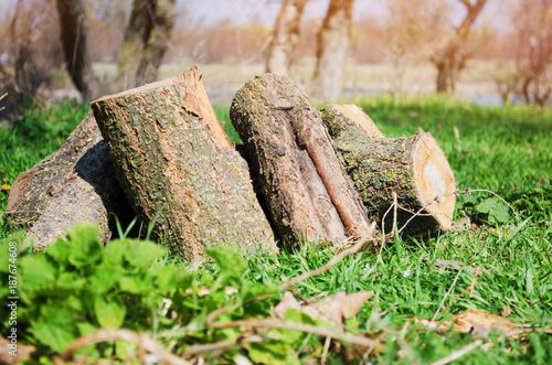Foto op Aluminium Brandhout textuur Firewood on green grass, outdoor recreation, spring, summer