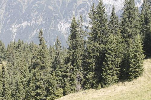 Foto op Aluminium Khaki woods in the alpine mountains