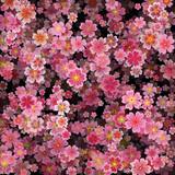 Sakura blossoms background, volume effect. Vector illustration