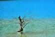 たくましい弁天沼の枯れ木(五色沼)