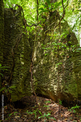 Tree roots on natural stone wall in forest - 187693633