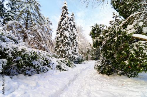Aluminium Blauwe hemel Winter