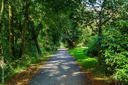 Papiers peints Route dans la forêt Walk in the park