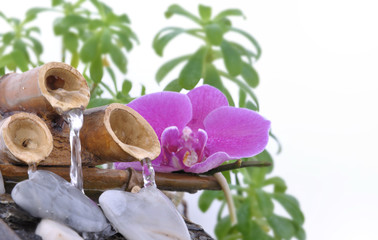 orchid on small fountain and pebble in heart shape on white background
