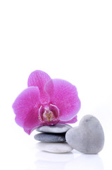 pink orchid on pebbles stacked and pebble in heart-shaped pebble on white background