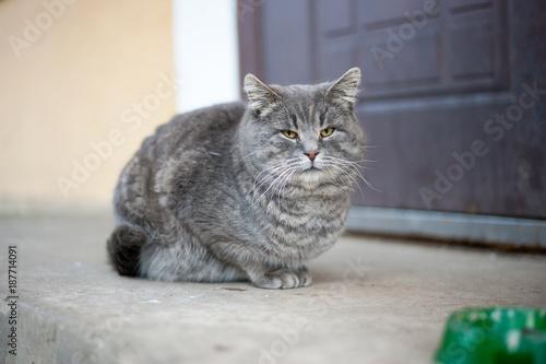Aluminium Kat Кот с миской