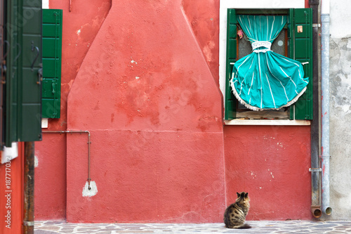 A cat is sitting and looking at a window with a green curtain near the house in Burano, Italy