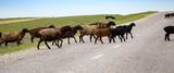 A herd of rams cross the road - 187720695