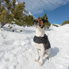 Cute dog enjoy winter. Terrier dog sitting on snow. Sunny winter day.