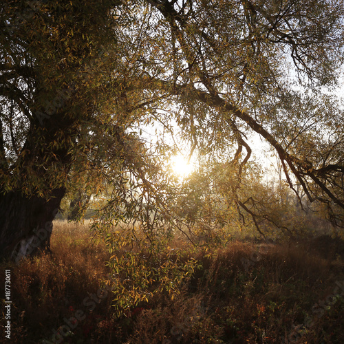 misty dawn in the grove on the banks of the river © Venera
