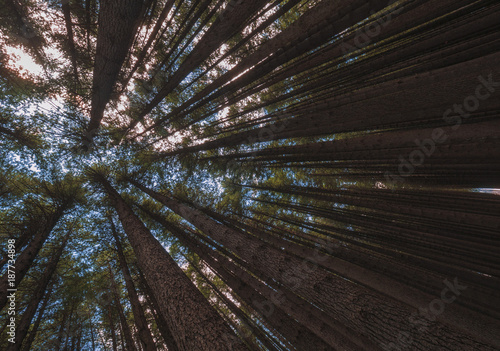 Aluminium Bamboe Looking up at the canopy of a forest