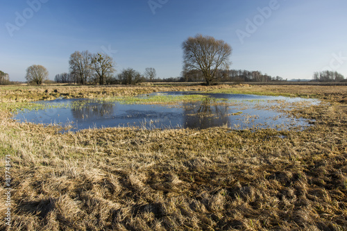 Foto op Plexiglas Gras Dry grass, wet meadow and trees without leaves against the sky