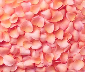 Background of pink rose petals
