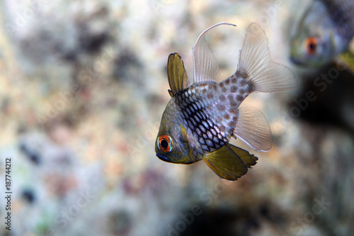 Fotobehang Natuur Beautiful salt water fish